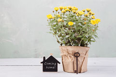 Home sweet home - beautiful  flowers in pot with message card Royalty Free Stock Photo