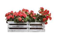 Home sweet home written on wooden box. Flowers boxes hanging on the wall - Home sweet home written on wooden box on white background royalty free stock image