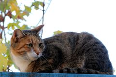 Home tabby cat Stock Image