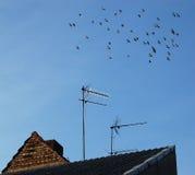 home television för antenn royaltyfri foto