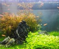 Home tropiskt fiskbeh?llareakvarium royaltyfri foto