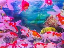 Home tropiskt fiskbeh?llareakvarium arkivfoto