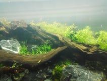 Home tropiskt fiskbeh?llareakvarium royaltyfria foton