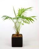 home växtkruka Arkivbilder