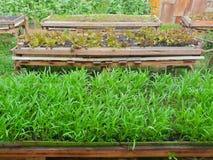 HOME - vegetais crescidos imagem de stock royalty free