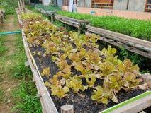 HOME - vegetais crescidos fotografia de stock royalty free
