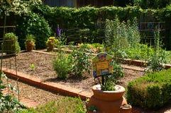 Home Vegitable Garden Stock Photo