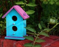 Home on a Wall. Bird house on a wall with a tomato plant Royalty Free Stock Images