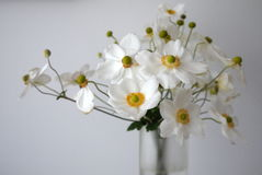 Home: white anemone flowers glass vase royalty free stock photography