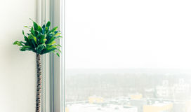 Home window. Potted plant near plastic window royalty free stock photography