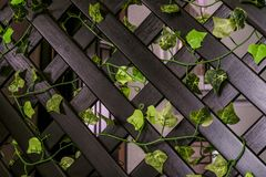 Home wooden decorative lattice fencing royalty free stock photo