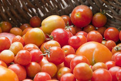 Home yield different tomatoes Stock Photo