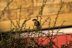 Homebird on Sunday stock photos