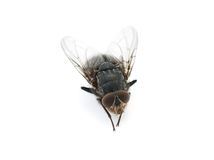 Homefly. Is isolated on a white background Stock Photography