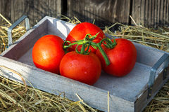Homegrow tomatoes Stock Images