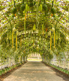 Homegrown λαχανικό περίπτερων Στοκ εικόνα με δικαίωμα ελεύθερης χρήσης
