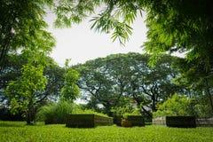 Homegrown λαχανικό στο ξύλινο δοχείο στον κήπο με το μεγάλο mimosa πίσω και το μπαμπού γύρω στοκ φωτογραφίες