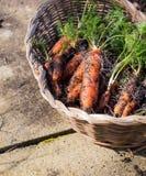 Homegrown οργανικά καρότα στο ψάθινο καλάθι στοκ εικόνα