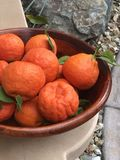 Homegrown πορτοκάλια σε ένα ξύλινο κύπελλο στοκ εικόνες