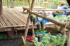 Homegrown φυτική ένωση στον ξύλινο κύκλο στοκ φωτογραφία με δικαίωμα ελεύθερης χρήσης