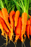 Homegrown Carrots Royalty Free Stock Photos