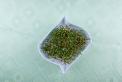 Homegrown cress Stock Images