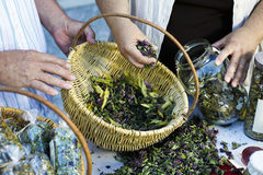 Homegrown dry herbs in the basket Stock Images