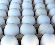 Homegrown Eggs Royalty Free Stock Photography