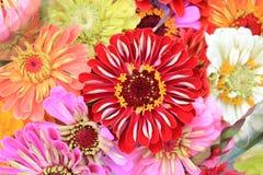homegrown färgrika blommor för bukett Royaltyfria Bilder
