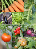 Homegrown Gartenprodukte stockfotos