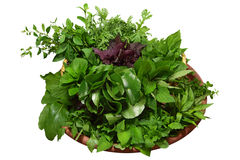 Homegrown Herbs Royalty Free Stock Images