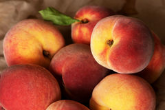 Homegrown juicy peaches from the garden. Organic Stock Photos