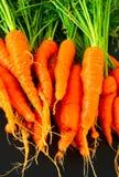 Homegrown Karotten Lizenzfreie Stockfotos
