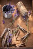 Homegrown lavender preparation for home drying in summer. On wooden table royalty free stock image