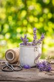 Homegrown lavender in a summer green garden. On wooden table royalty free stock images