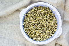 Homegrown organic beansprouts Stock Photos