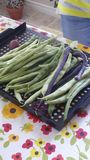 Homegrown organic green beans Royalty Free Stock Image