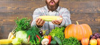 Homegrown organic harvest benefits. Grow organic crops. Community gardens and farms. Healthy lifestyle. Farmer hold. Corncob or maize wooden background. Farmer stock photo