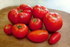 Homegrown organic tomatoes Stock Photos
