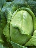 homegrown organisk sugarloafgrönsak för kål royaltyfria foton