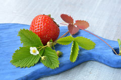 Homegrown, ripe strawberry and blossoming flower on blue, wooden texture close up. Homegrown, garden, ripe strawberry and blossoming flower on blue, wooden Stock Image