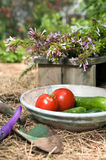Homegrown Tomaten Lizenzfreie Stockfotos