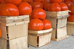 homegrown tomater royaltyfri bild