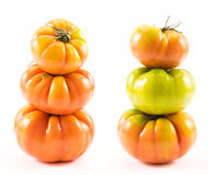Homegrown tomatoes (Solanum lycopersicum) Stock Images