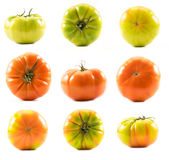 Homegrown tomatoes (Solanum lycopersicum) Royalty Free Stock Images