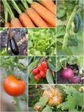 Homegrown trädgårds- produkter arkivfoton