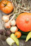 Homegrown vegetables Stock Photography