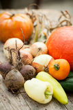Homegrown vegetables Stock Images