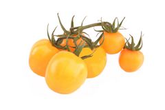 Homegrown Yellow Tomato On Vine Isolated Royalty Free Stock Photo