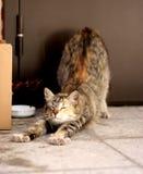homeless кота Стоковые Изображения
